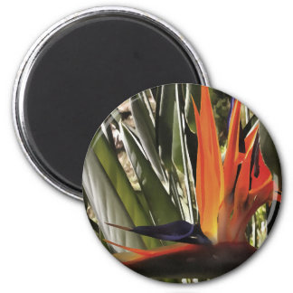 Bird of Paradise (Strelitzia) Magnet