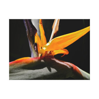 Bird of Paradise Stretched Canvas Photograph Canvas Print