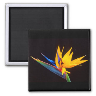 Bird of Paradise: Tropical Flower 2 Inch Square Magnet