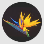 Bird of Paradise: Tropical Flower Classic Round Sticker