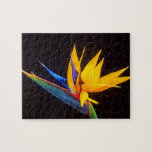 Bird of Paradise: Tropical Flower Jigsaw Puzzles