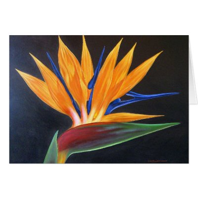 Tropical Bird Painting on Bird Of Paradise Tropical Flower Painting   Multi Cards From Zazzle