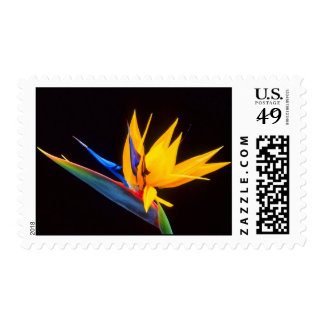 Bird of Paradise: Tropical Flower Postage