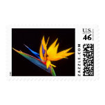 Bird of Paradise: Tropical Flower Postage Stamp