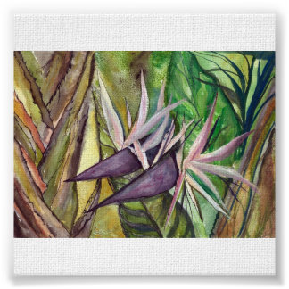 Bird of Paradise - watercolor Posters