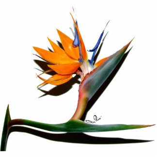 Bird of Paradise with Shadow Photo Sculpture