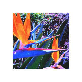 Bird-of-Paradise Wrapped Canvas Canvas Print