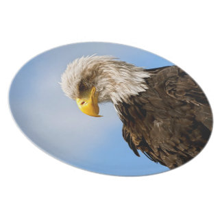 Bird of Pray Bald Eagle Dinner Plate
