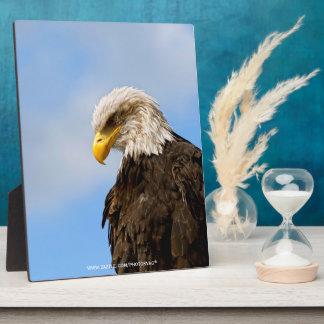 Bird of Pray Bald Eagle Display Plaque