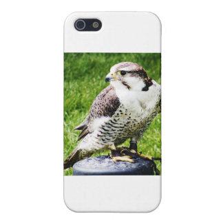 Bird of Prey #2- Peregrine Falcon Case For iPhone SE/5/5s