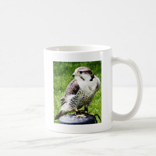 Bird of Prey #2- Peregrine Falcon Coffee Mugs