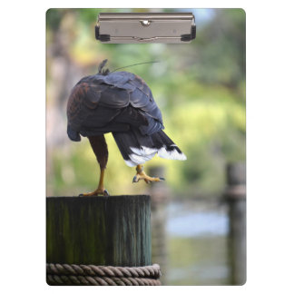 bird of prey back view on log foot up clipboards