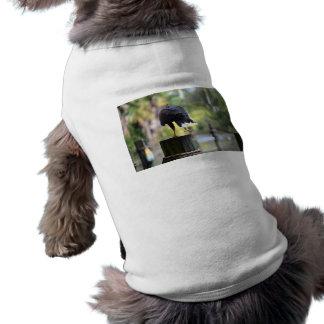 bird of prey back view on log foot up pet t-shirt