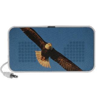 Bird of Prey, Bald Eagle in flight, Kachemak Travel Speakers