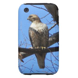 Bird Of Prey iPhone 3 case