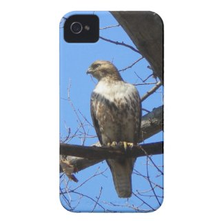 Bird Of Prey iPhone 4 case casemate_case
