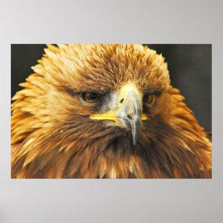 Bird of Prey Print
