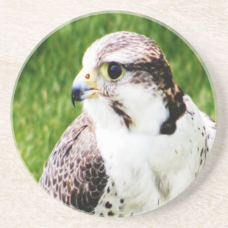 Bird Of Prey waiting for true love and peace Beverage Coaster
