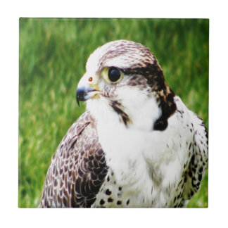 Bird Of Prey waiting for true love and peace Tile