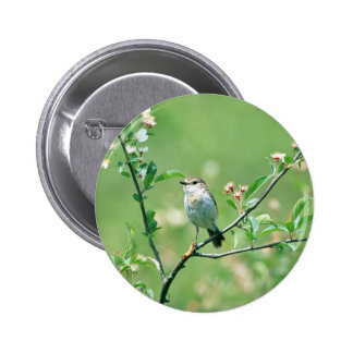 Bird Of Spring Pinback Buttons