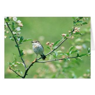 Bird Of Spring Card