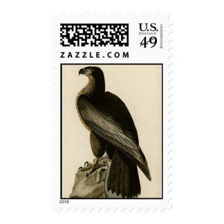 Bird of Washington Postage