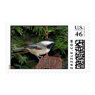 Bird On A Birdfeeder Postage Stamp