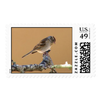 Bird on a Branch Postage Stamps