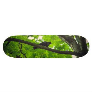 Bird on a branch skateboard deck