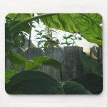 Bird on a Fence Mouse Mats