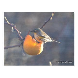 Bird on a Half-Eaten Apple Post Cards