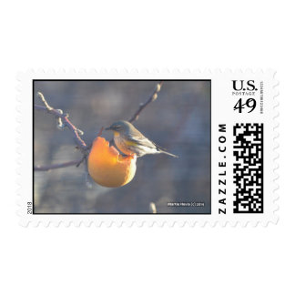 Bird on a Half Eaten Apple Postage Stamps