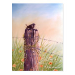 Bird on a Picket Fence  - Postcard