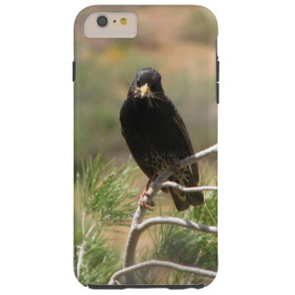Bird on a pine branch iPhone 6Plus Case