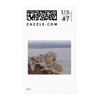 Bird on a Rock Stamp