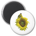 Bird On A Sunflower 2 Inch Round Magnet