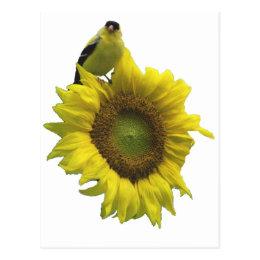 Bird On A Sunflower Postcard