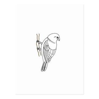 bird on a twig postcard