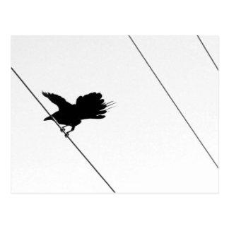 Bird on a Wire :: Find Balance :: Take Flight Postcard