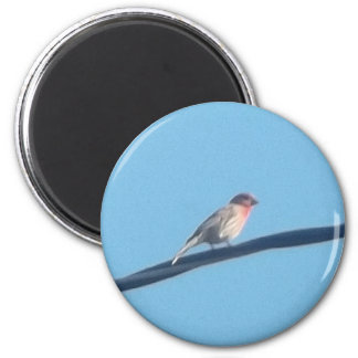 Bird on a wire magnet