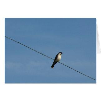 Bird on a Wire Photo Card