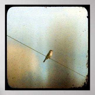 Bird on a Wire print