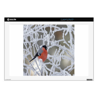 "Bird On An Icy Branch 17"" Laptop Skins"