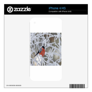 Bird On An Icy Branch Decal For iPhone 4S