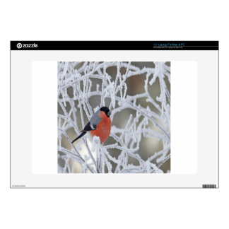 Bird On An Icy Branch Skin For Laptop