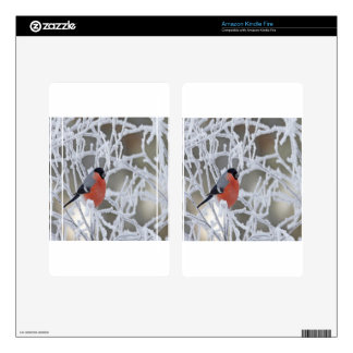 Bird On An Icy Branch Skins For Kindle Fire