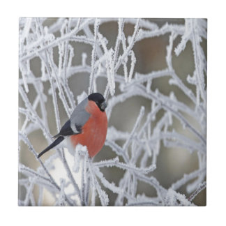 Bird On An Icy Branch Tiles