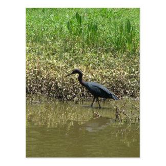Bird on Avery Island, Louisiana Postcard