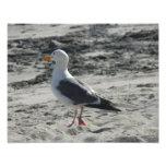 Bird on beach Photographic Print