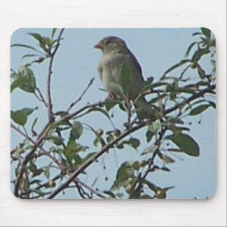 Bird On Branch Mousepads